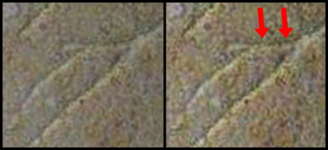 Side-by-side images of the original image (left) of a supposed 'yod' and a line above it. The line above the supposed 'yod' is completely ignored. (Original image here: http://thejesusdiscovery.org/press-kit-photos/?wppa-album=3&wppa-photo=15&wppa-occur=1)