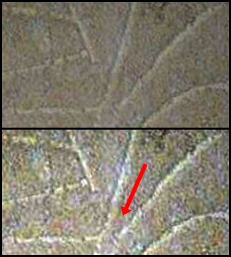 An over-under comparison of the original image (above, available here: http://thejesusdiscovery.org/press-kit-photos/?wppa-album=3&wppa-photo=15&wppa-occur=1) and the same image with the contrast and levels increased for clarity. The red arrow points to a space between the lines that make up the supposed 'nun'. Thus, this is not likely a 'nun'.
