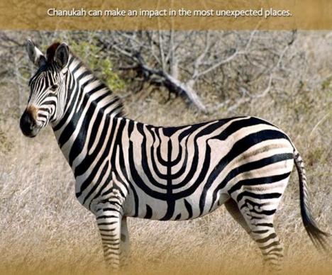 Hanukkah Zebra